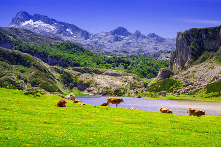 landscape with lake and pasture. Lake Ercina.   Spain Stock Photo