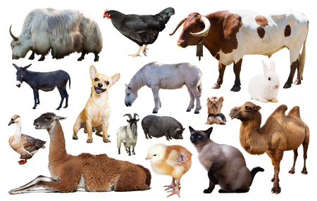 set of various farming animals including cattle and pets isolated