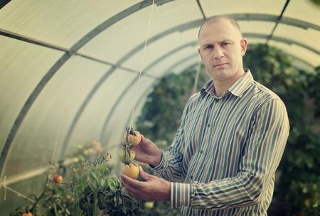 De mannelijke landbouwer kijkt tomatenplant in serre