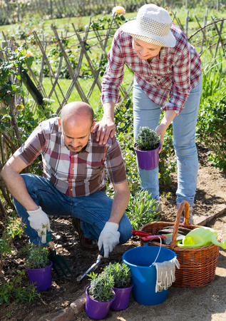 Smiling senior couple taking care of green plants in the garden  Stock Photo