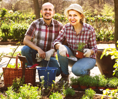 portrait of a lovely positive russian senior couple taking care of green plants in the garden Stock Photo