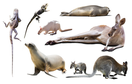 Set of various isolated wild animals including birds, mammals, reptiles from Australia