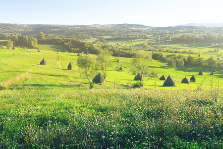 Picturesque lawns of Karpaty on Bucovina in Romania. Фото со стока