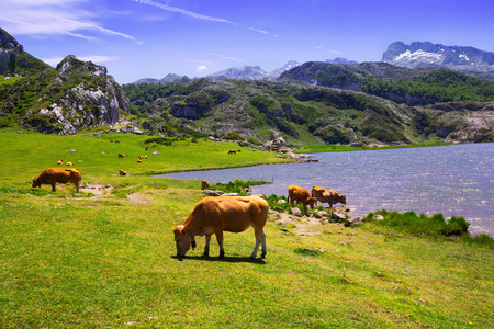beautiful  mountains landscape with lake and pasture Banco de Imagens - 96064030