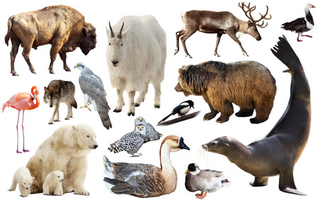 assortment of many north american wild birds and mammal animals isolated on white background Standard-Bild