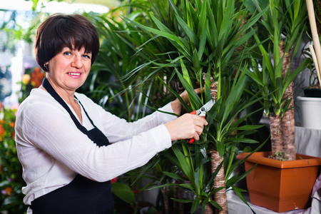 Smiling cheerful positive woman seller tending yucca palm trees in flower shop Stock Photo