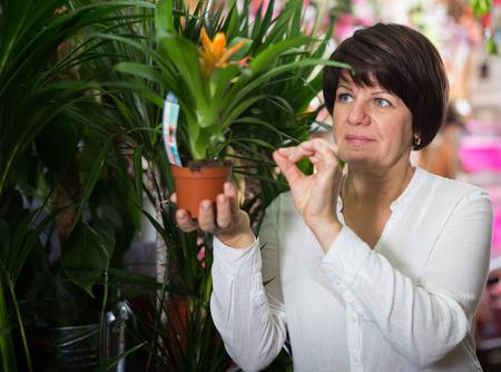 Female customer choosing best bromelia plant to buy in flower shop