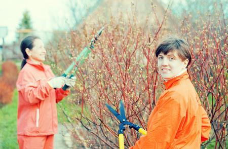 Two women pruning bush in the garden