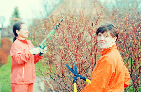 Two women pruning bush in the garden Standard-Bild - 97847188