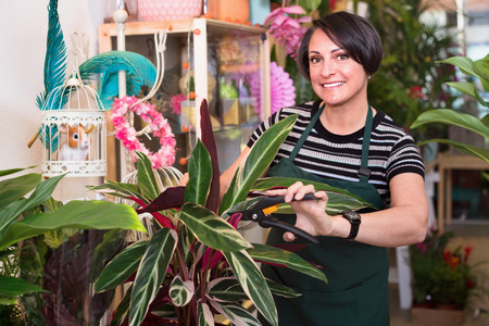 Portrait of  smiling female florist arranging a calathea flower in the gardening department