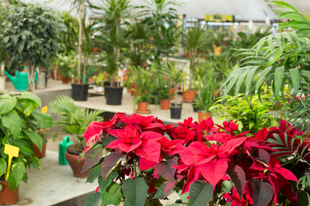 Image of rows with colorful flowers in greenhouse.