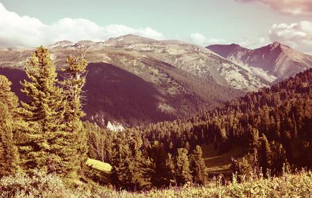 mountains landscape with cedar  forest. Altai, Siberia Stok Fotoğraf