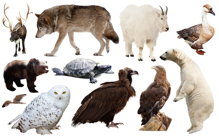 collection of different birds and mammals from north america isolated on white background