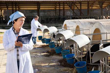 Happy adult professional workers in white gown taking care of cows herd
