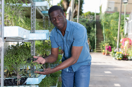 Successful skilled man owner of greenhouse checking young seedlings