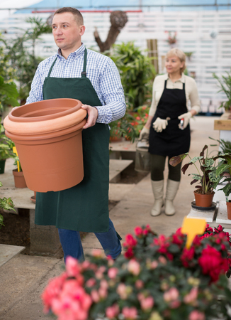 Man gardener is transplanting flowers in pots in orangery.
