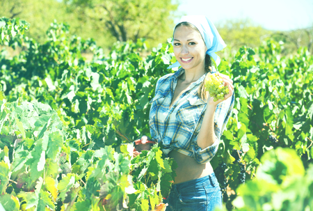 Smiling young female worker picking ripe grapes in vine garden