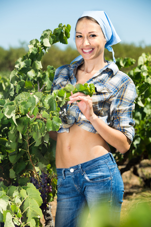 Young cheerful woman gardener standing among grapes trees on sunny day
