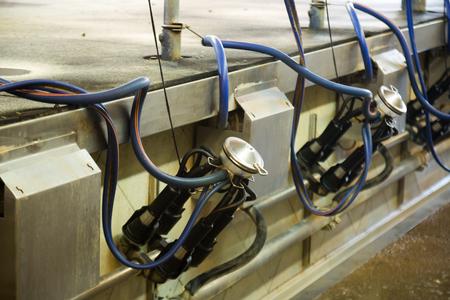 Mechanized milking equipment in cow farm
