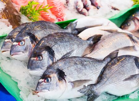 dorado on counter of fish market in spain