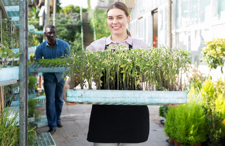 Portrait of young woman gardener holding crate with seedlings in greenhouse Stock Photo