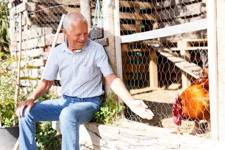 Senior man enjoying pastime in his garden plot, feeding poultries in hen house outdoor Stock Photo