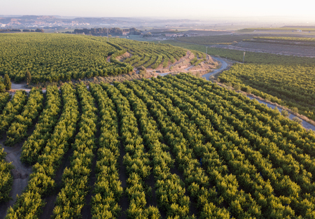 Panoramic view from drone of fruit farms with peach trees