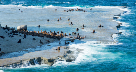 Argentinian Valdes Peninsula with rookeries of sea lions at Atlantic coast