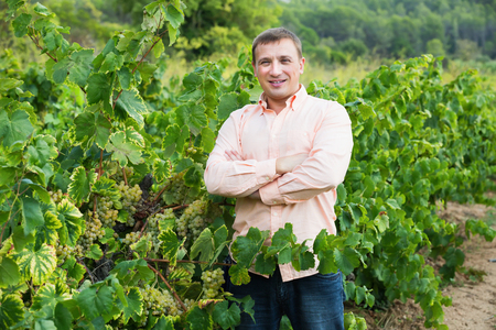 Young farmer standing near wine grape and leaves in summer day Фото со стока