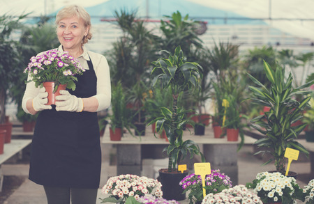 Adult woman is standing with blooming flower on her work place in greenhouse. Stock fotó