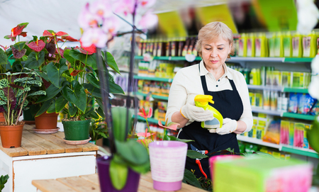 Adult diligent serious glad female gardener is standing with substances for care of flowers in greenhouse.