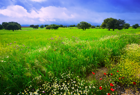 Rural field with green grass, small flowers and heavy rainy cloudscape Фото со стока - 107214721