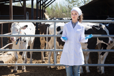 Thoughtful woman wears lab coat and is concerning about cow in the hangar