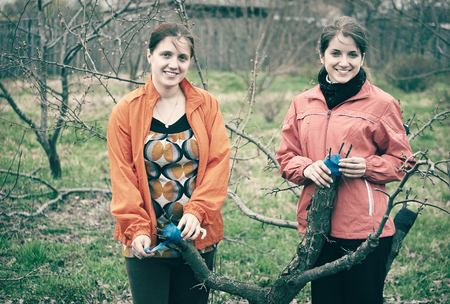 Two young women inarching branch to tree at orchard in spring