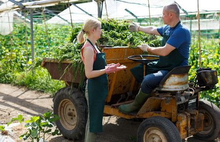 Man and woman gardeners agrimotor near seedlings in  greenhouse