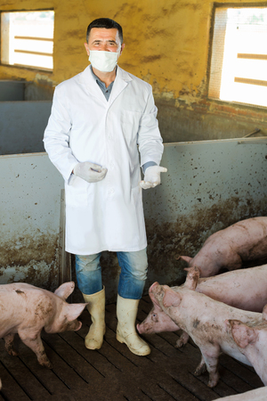 Man veterinarian in protective clothing standing in sty with hogs