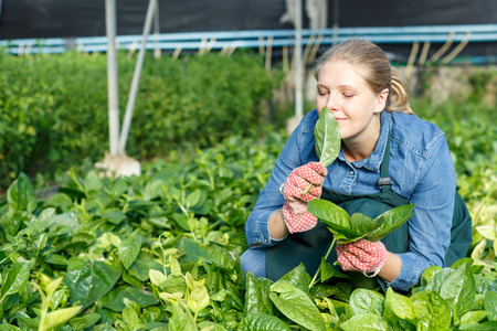 Positive female gardener checking growing spinach seedling in glasshouse