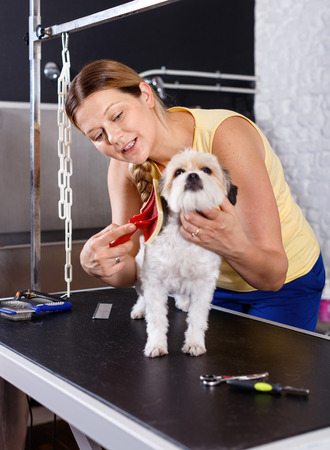 Cute havanese puppy getting treatments by  cheerful positive female pet groomer in salon
