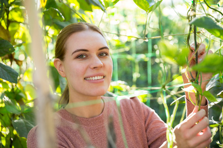 Woman controlling quality of legume plants in her organic plantation Stock fotó