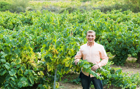 Portrait of happy smiling male farmer standing near grapes in vineyard at summer