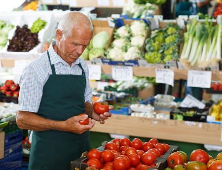 Senior male seller in apron putting fresh products on shelves in greengrocery
