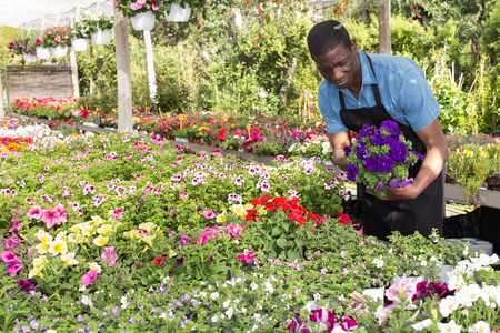 Successful skilled florist man working with flowers in greenhouse