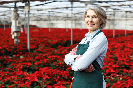 Portrait of mature woman florist engaged in cultivation of Euphorbia pulcherrima (poinsettia) in glasshouse, proud of her plants Imagens