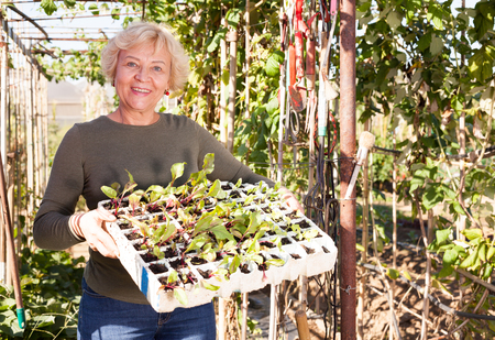 Positive mature woman demonstrating box of seedlings in plantation Stock Photo