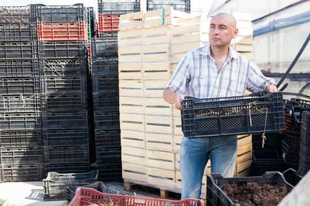 Focused male farmer taking box with soil for fertilizing plants