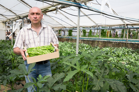 Portrait of  man horticulturist standing with crate of okra in  hothouse Stock Photo
