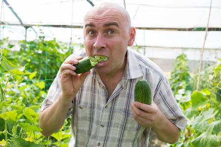Portrait of man  professional gardener eating fresh cucumber in  hothouse