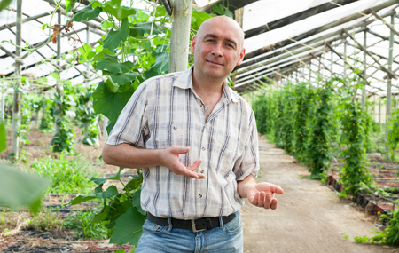 Positive man worker checking plants while gardening in hothouse