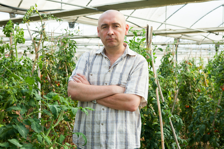 Serious man gardener standing near tomatoes seedlings in  greenhouse