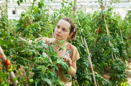 Successful woman owner of greenhouse examining quality of growing vegetables Stock Photo